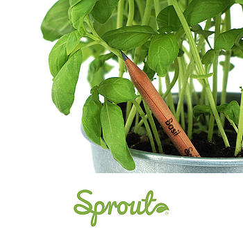 Sprout-Pencil
